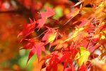 【格安SIMで快適スマホライフ】スマホ撮影術④美しい紅葉をより美しく撮るコツ!