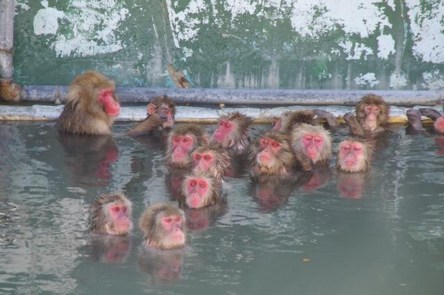 温泉でウォームシェア
