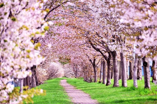 スマホで桜を撮影する方法