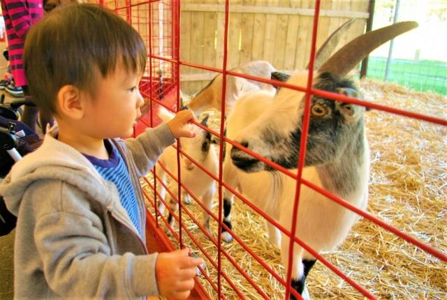 【体験ツアー】かけがえのない思い出に!動物園・水族館のバックヤードツアーへ行こう!